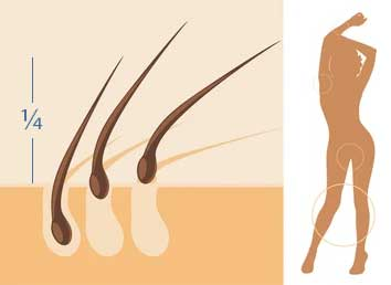 minimum length of hair for waxing is ¼ inch